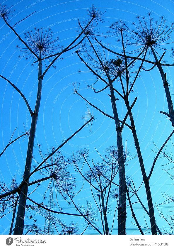 dem Himmel entgegen... Natur blau Pflanze Winter ruhig schwarz Einsamkeit dunkel kalt Tod Gras Traurigkeit Feld Horizont