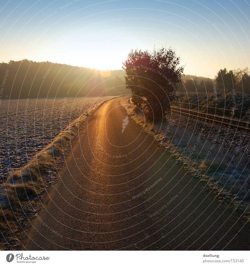 Morgensonne Winter Sonne Straße Gleise glänzend Gegenlicht kalt frisch Himmel Schönes Wetter Gold Mund Kleinbahn Wald Baum Sträucher niedlich Blendenfleck Feld