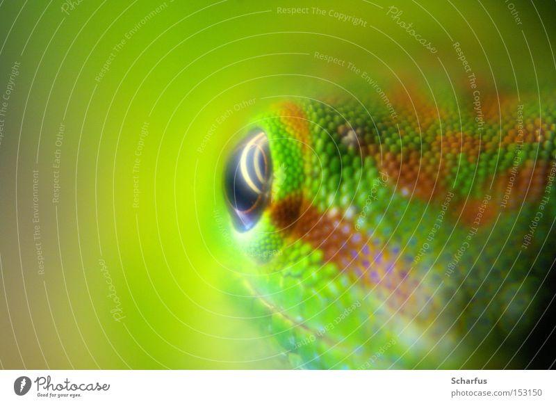 Gaaaaaanz nah.... Farbfoto Detailaufnahme Makroaufnahme Hintergrund neutral Kunstlicht Reflexion & Spiegelung Schwache Tiefenschärfe Froschperspektive