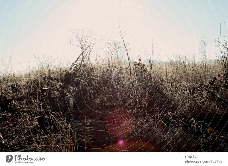 vereist II Himmel Natur Sonne Winter kalt Schnee Gras Beleuchtung Eis Wind Frost Halm