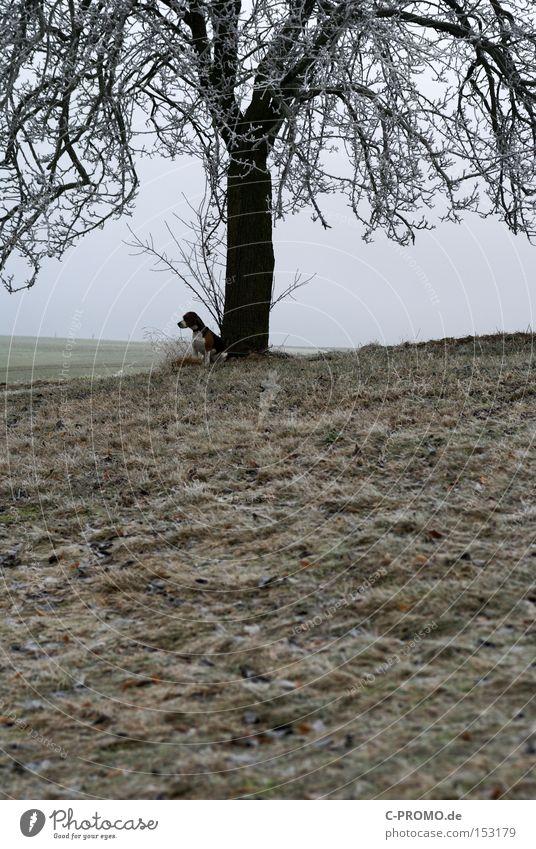 marooned in winter Hund Baum Tier Winter kalt warten Säugetier Langeweile ausgesetzt angeleint