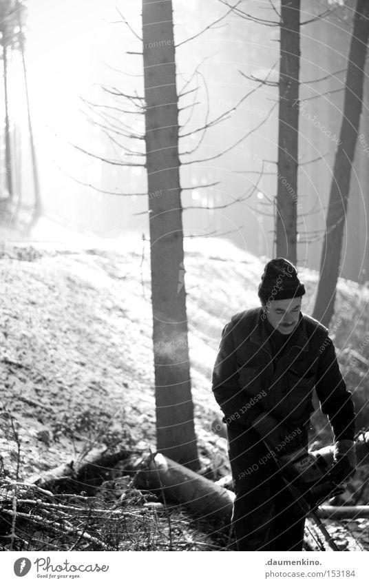 ghost riders in the sky Mann Kettensäge Wald Holz Baum kalt Luft Arbeiter Ast Nebel Sonne Handwerk Schnee Eis Forstwirtschaft Holzfäller
