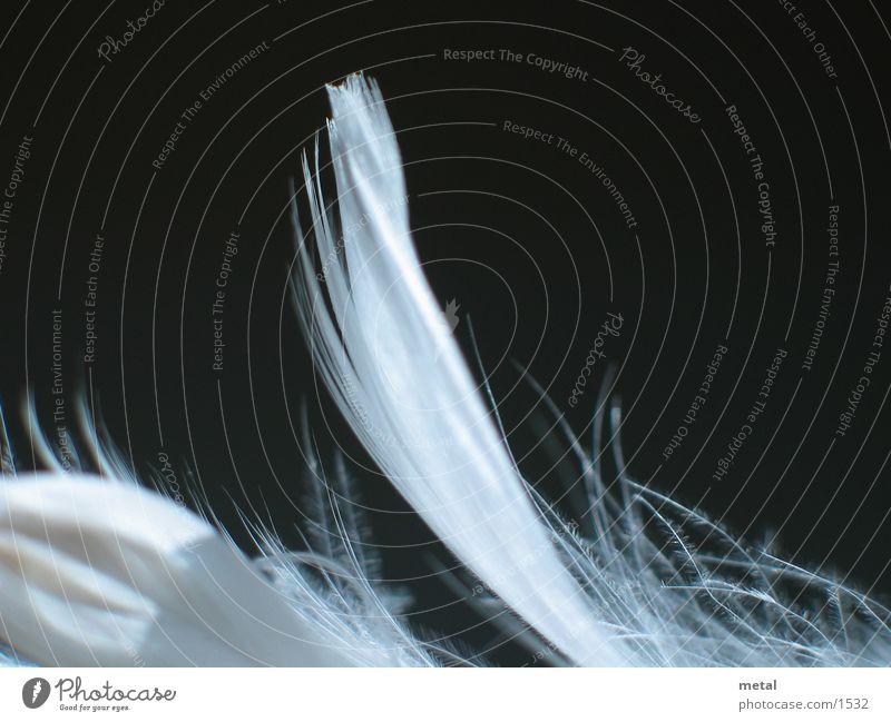 Federn - Variation #2 weiß schwarz Hintergrundbild Vogel Makroaufnahme