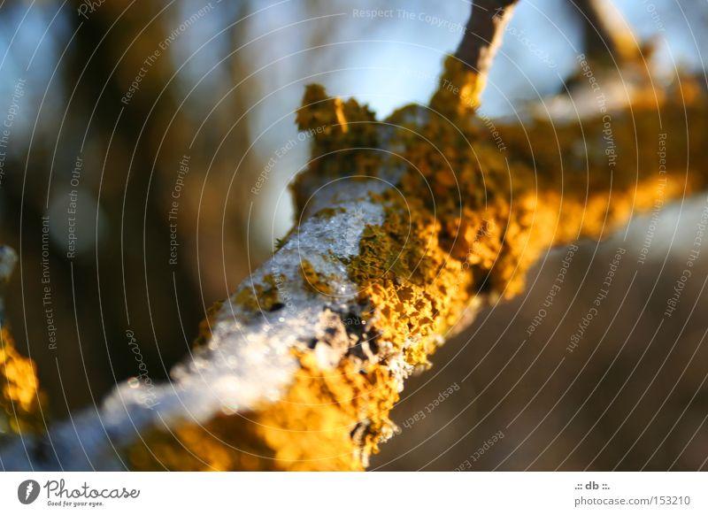 .:: WINTERzauber ::. Baum grün Winter Schnee Ast