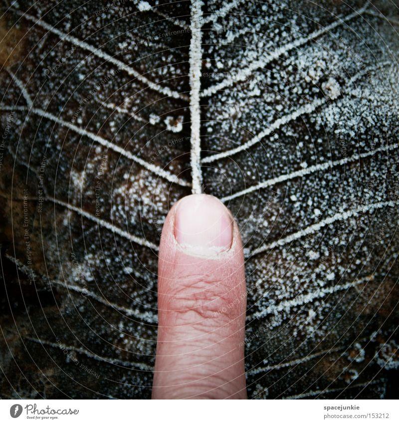 Am Puls der Zeit alt Winter ruhig Blatt kalt Schnee Gefühle Finger Zeit Frost Verfall Gefäße Raureif Blattadern messen Puls