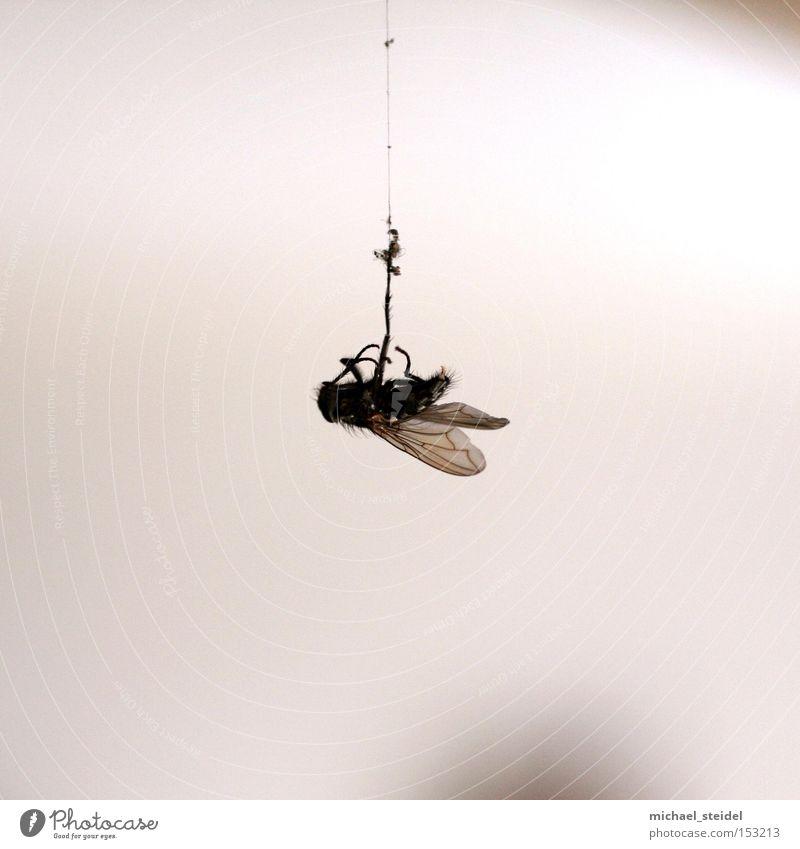 Aufgehängt! Natur Tier Fliege Ekel Desaster Unfall notleidend Spinngewebe