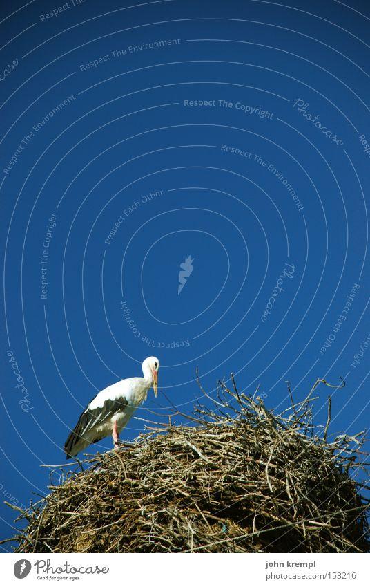 nestchen Himmel blau Vogel schwanger Nest Storch Nestbau