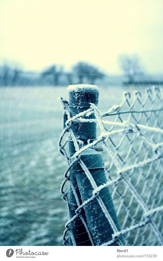 Es ist kalt. grün weiß Winter Eis Zaun Bildausschnitt Raureif Zaunpfahl Maschendrahtzaun