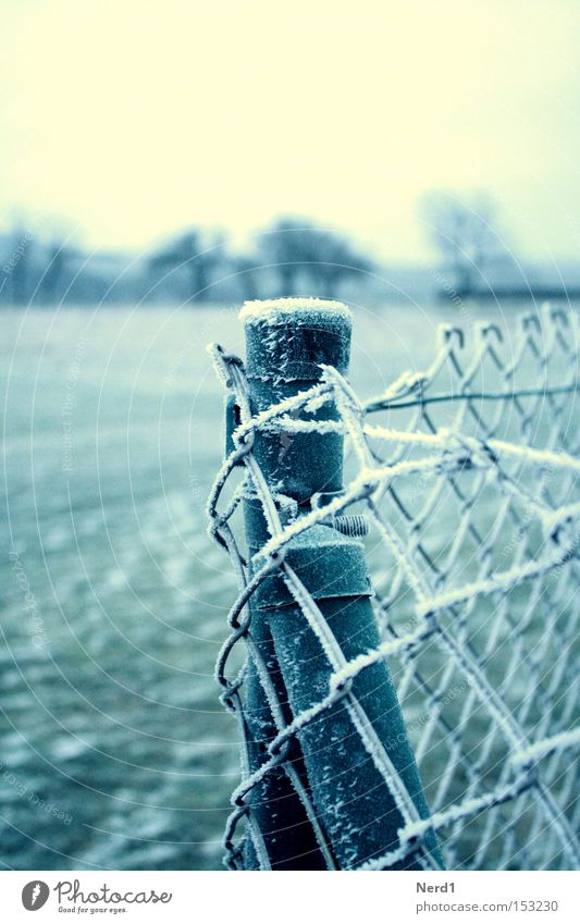 Es ist kalt. Zaun Maschendraht Eis Winter weiß grün Raureif Maschendrahtzaun Detailaufnahme Bildausschnitt Gedeckte Farben Zaunpfahl