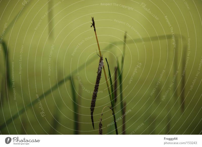 Weiher Erholung Wolken Wiese Gras laufen Pause Fluss Schifffahrt Beeren Samen Bach Ähren Lebensraum Bergwiese Getreide