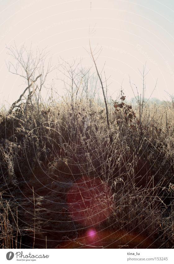 vereist II* Himmel Natur Sonne Winter kalt Schnee Gras Beleuchtung Eis Wind Feld Frost Halm Sonnenfleck