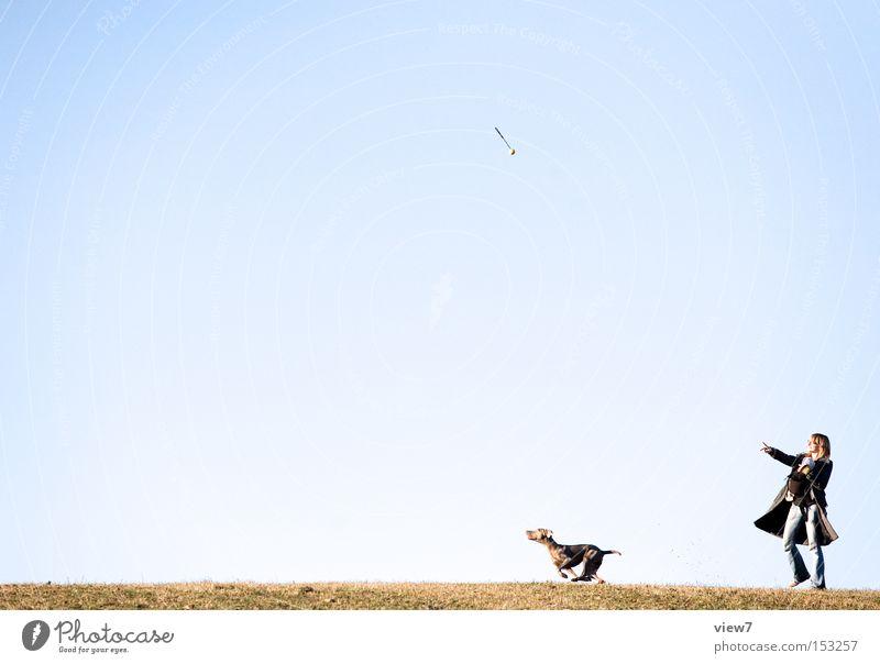 ... und los! Hund Sommer Himmel werfen apportieren laufen Rennsport Licht springen Ball fliegen loslassen Sonnenlicht Boden Gras Freude Freizeit & Hobby