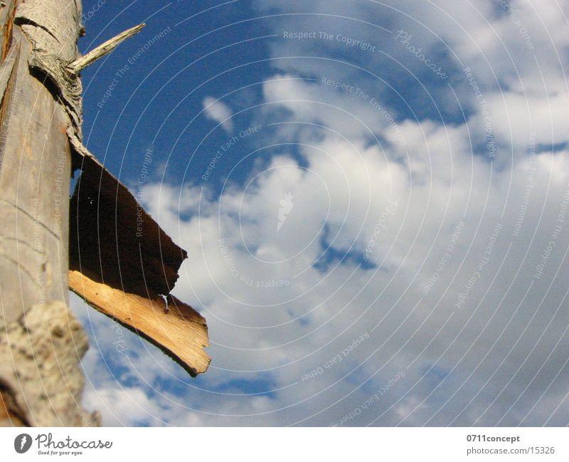 Zaunpfahl Natur Himmel blau Wolken Holz Baumstamm Baumrinde