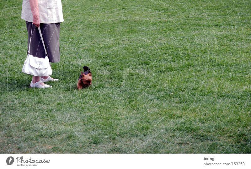 holt Stöckchen Senior Freude Weiblicher Senior mit Handtasche führt ihren kleinen Hund auf einer Wiese Gassi Der Kläffer tollt ohne Leine Zum Glück nicht durch