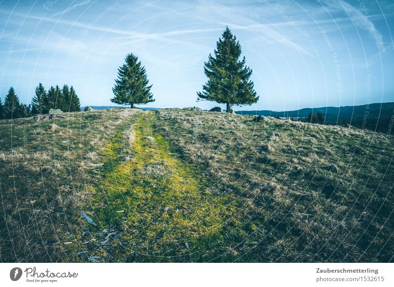 2 Bäume Natur Landschaft Hügel Berge u. Gebirge Wege & Pfade gehen hoch Zusammensein Neugier Abenteuer Bewegung Horizont Klima Kontakt Feldberg Schwarzwald