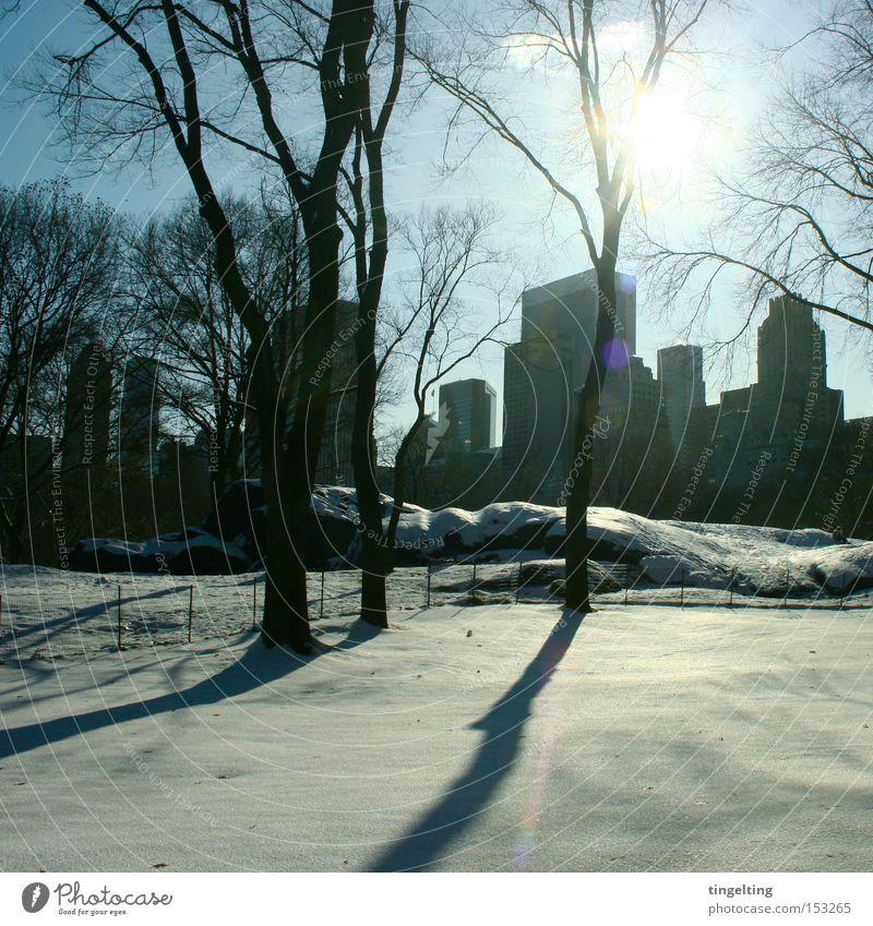 schattenschlag Baum Sonne blau Winter ruhig schwarz Schnee Pause Klarheit Skyline New York City Central Park
