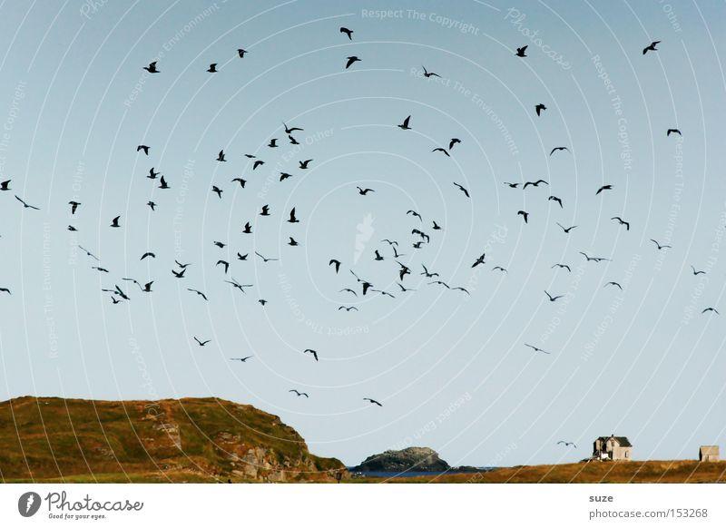 Haus am Meer Freiheit Umwelt Natur Landschaft Pflanze Urelemente Luft Himmel Wolkenloser Himmel Horizont Sommer Schönes Wetter Küste Tier Wildtier Vogel Schwarm