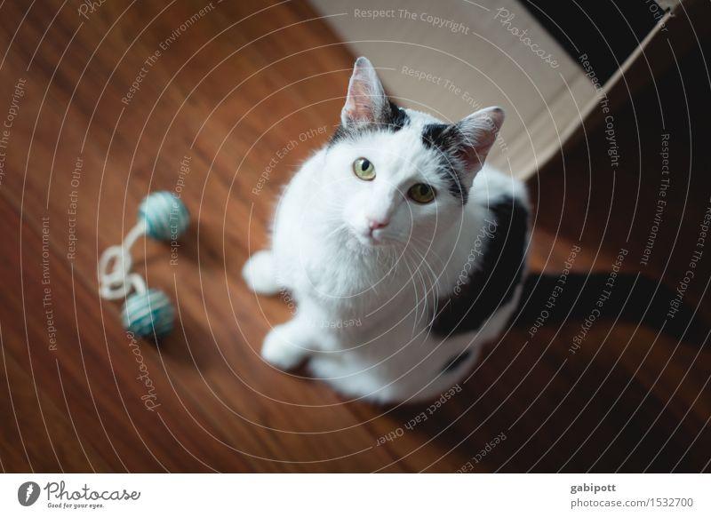 catcontent   Spielst du mit mir? Haustier Katze 1 Tier beobachten Spielen Freundlichkeit Fröhlichkeit niedlich schön weich schwarz weiß Zufriedenheit