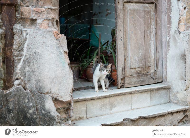 02_Katze auf Treppe in Havanna Kuba Haus Mauer Wand Fassade Tier Haustier Nutztier 1 Stadt wild Lebensfreude Tierliebe Schüchternheit Identität einzigartig