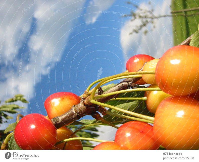 Kirschen ernten Himmel Baum rot Sommer Wolken gelb Stengel Ernte Frucht