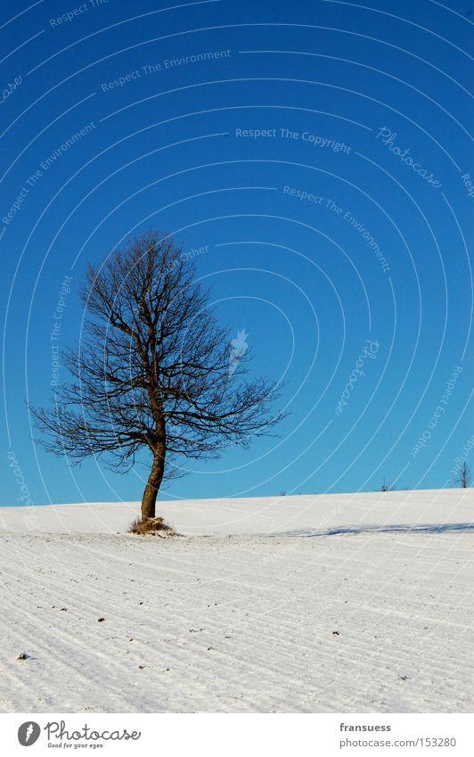 weiß/blau Baum Schnee Himmel Winter Einsamkeit Natur poetisch Bayern Ferien & Urlaub & Reisen Erholung Spaziergang