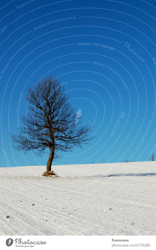 weiß/blau Natur Himmel weiß Baum blau Winter Ferien & Urlaub & Reisen Einsamkeit Schnee Erholung Spaziergang Bayern poetisch