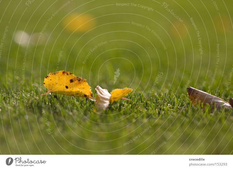 Laub Blatt Ferne Herbst Tod Gras Rasen Frieden Halm