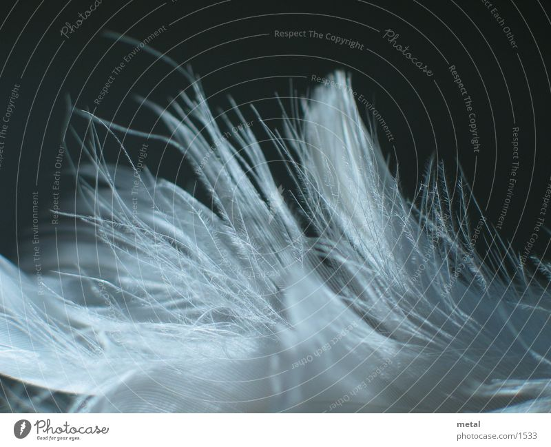 Federn - Variation #3 weiß schwarz Hintergrundbild Vogel Makroaufnahme