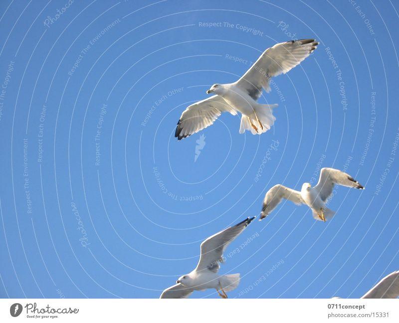 Griechische Flugstaffel Himmel Freiheit Vogel fliegen Luftverkehr