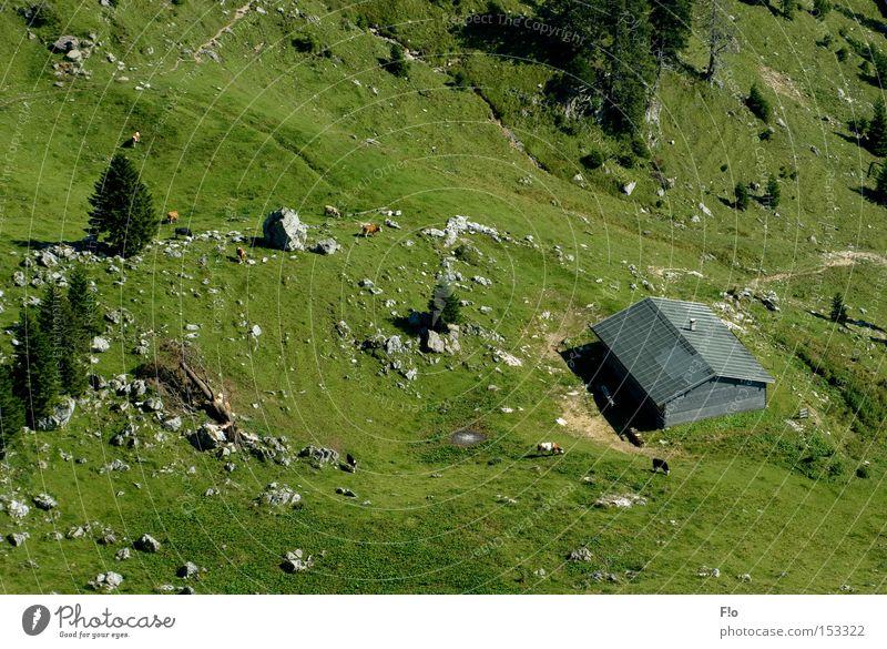 Alm- Aussichten Berge u. Gebirge Berghütte Almabtrieb
