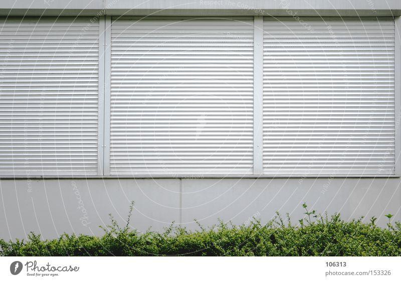 Fotonummer 107005 Gastronomie Pflanze Sträucher Wiese Stadt Haus Einfamilienhaus Fenster dunkel hell grün weiß Neugier Heimweh Einsamkeit Schüchternheit