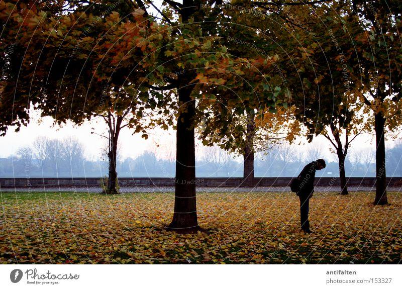 Ein Männlein steht im Walde Baum Natur Rheinwiesen Düsseldorf Herbst Blatt Mann gebeugt Baumstamm Himmel Haus Promenade Wiese