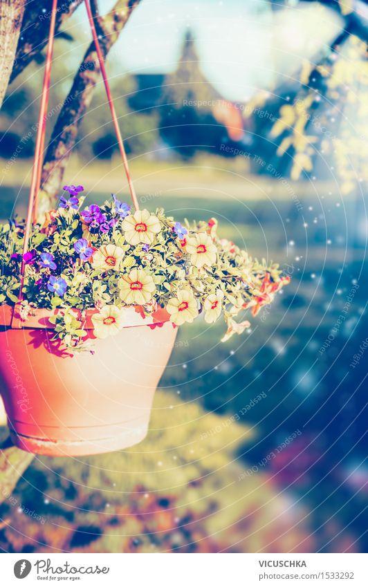 Hängende Blumentopf mit Petunien auf Sommergarten Natur Pflanze Baum Blatt Blüte Herbst Frühling Stil Garten rosa Design Park Dekoration & Verzierung Blühend