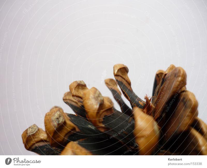 pinea. Natur alt Baum Pflanze schwarz ruhig Umwelt Holz Linie braun Hintergrundbild natürlich Design Perspektive Dekoration & Verzierung Wandel & Veränderung