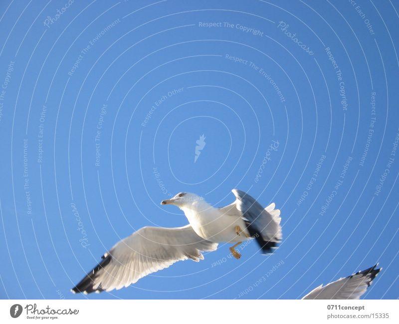 Landeanflug Vogel fliegen frei Luftverkehr Flügel Flugzeuglandung gleiten