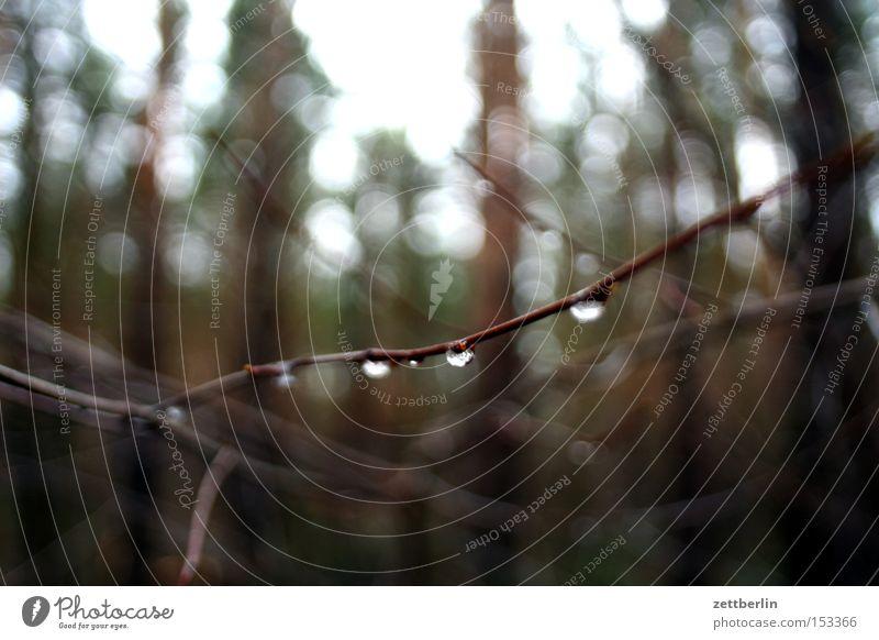 Tropfen Wasser Baum Wald Herbst Traurigkeit Park Regen Wetter Wassertropfen nass Trauer Sträucher Tropfen Ast Verzweiflung feucht