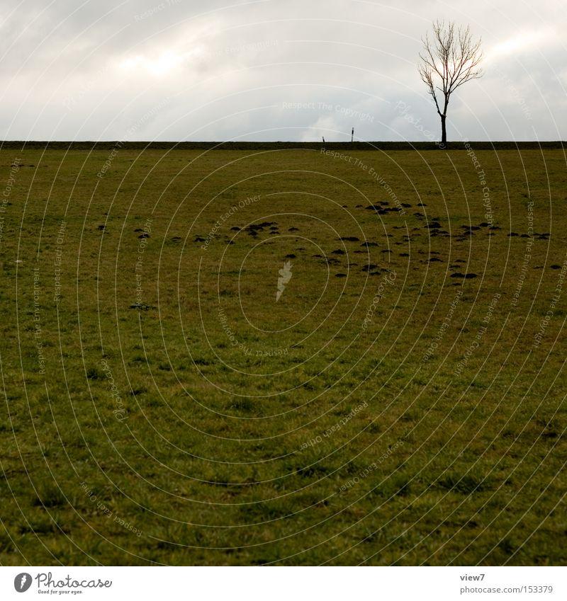 MaulwurfCity Himmel Baum Winter ruhig Einsamkeit Herbst Wiese Feld Wetter frei Horizont Erde trist Langeweile
