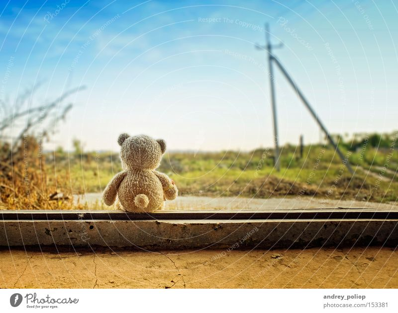 kleiner Bär schön Tier Hintergrundbild Farbe niedlich Phantasie Gras grün Glück Leben wenig Natur Himmel Kindheit