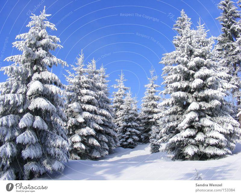 Märchenwald Natur blau weiß Baum Ferien & Urlaub & Reisen Pflanze Winter Wald Erholung Umwelt Landschaft Schnee Berge u. Gebirge Wetter Schönes Wetter Fernweh