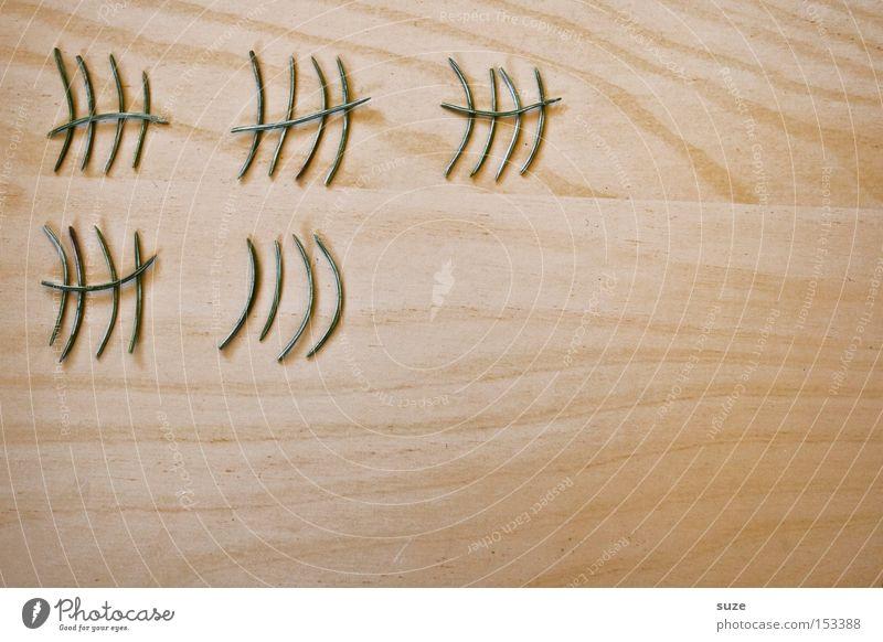 Die Tage sind gezählt grün Freude lustig Holz klein außergewöhnlich warten Dekoration & Verzierung einzeln Tisch Kreativität Idee Vorfreude Basteln zählen Maserung