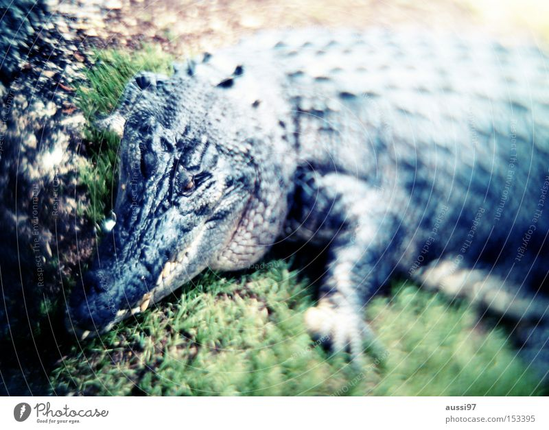 Handtaschenprototyp Angst gefährlich bedrohlich Leder Panik Reptil Dinosaurier Krokodil Kaiman