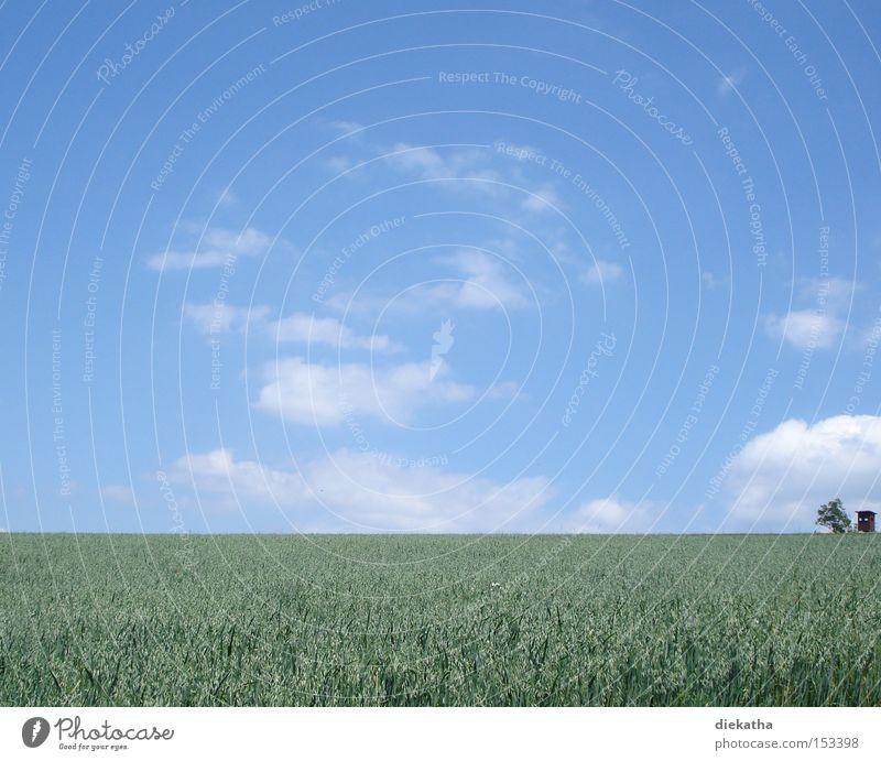 Und es war Sommer Himmel Wolken blau grün Feld Landwirtschaft Hochsitz Baum Ferne Sauerland Jagd