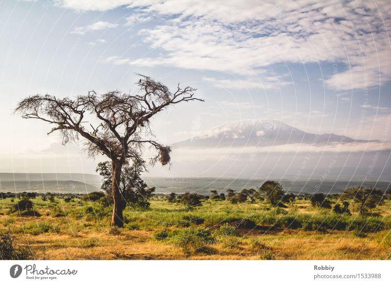 Kilimandscharo Natur Ferien & Urlaub & Reisen Baum Landschaft Ferne Berge u. Gebirge Gras Tourismus wandern Idylle Sträucher Ausflug Abenteuer Gipfel