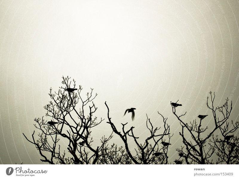 vogelversammlung 2 Baum dunkel Zusammensein Vogel mehrere gruselig Geäst begegnen spukhaft Versammlung Rabenvögel Vogelschwarm