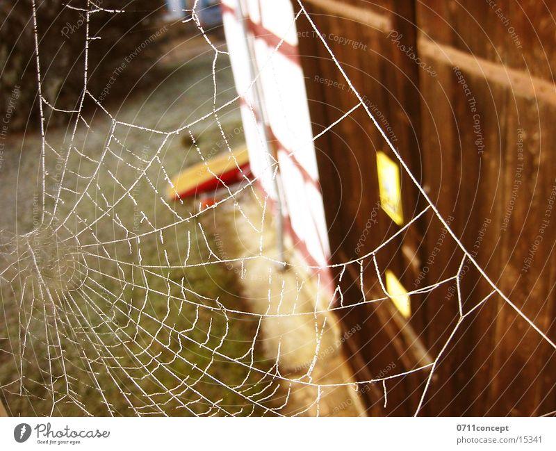 Pfui Spinne! Fenster Netz Tor Spinnennetz