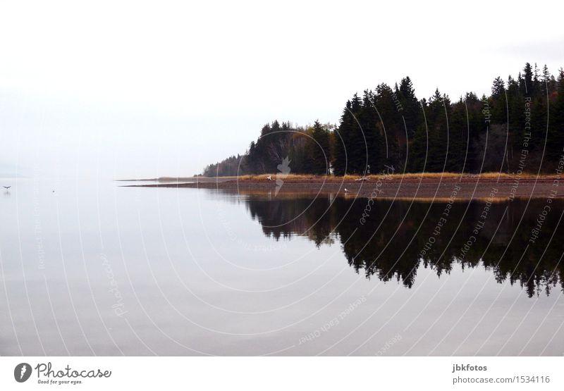 Ruhe Landschaft Wald See Sympathie Kanada Spiegelbild