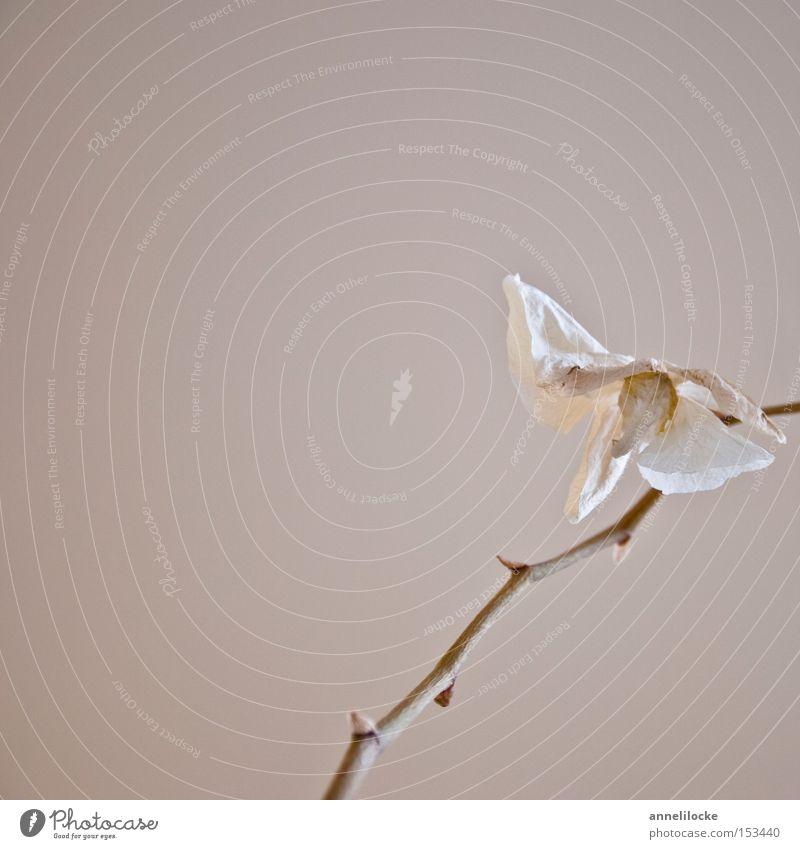 paper flower schön weiß Blume Pflanze Einsamkeit Tod Blüte Trauer Dekoration & Verzierung Häusliches Leben Vergänglichkeit zart Stengel Verzweiflung Orchidee zerbrechlich