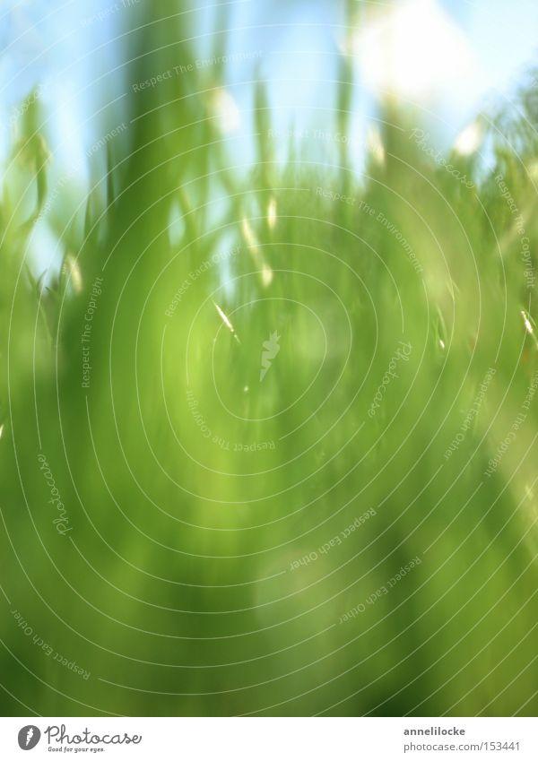 ganz viel grünes Umwelt Natur Landschaft Pflanze Himmel Frühling Sommer Gras Blatt Grünpflanze Park Wiese Feld Wachstum Fröhlichkeit frisch hell Boden zart