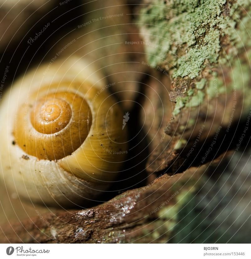 gewöhnliches Schneckenhaus Natur Tier Sicherheit Geborgenheit