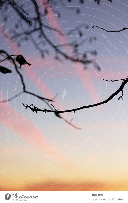 himmlisches Durcheinander Himmel Natur blau rot Blatt Holz rosa orange Ast vertikal